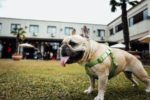 Pet-Friendly Things to Do in Atlanta